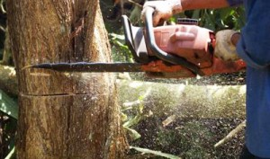 Tree Felling in Southern Suburbs