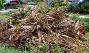 garden refuse removal service Cape Town