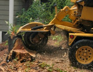 Stump Grinding Removal Cape Town