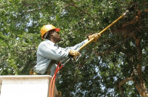 Durbanville Tree Felling Services